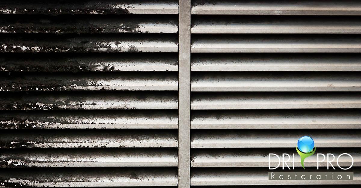 Professional Mold Mitigation in Walton County, FL