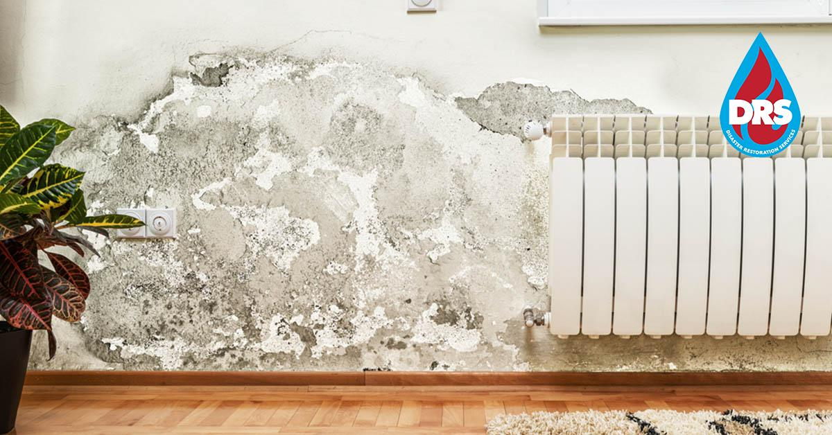 IICRC Certified Mold Mitigation Contractors in Gypsum, CO