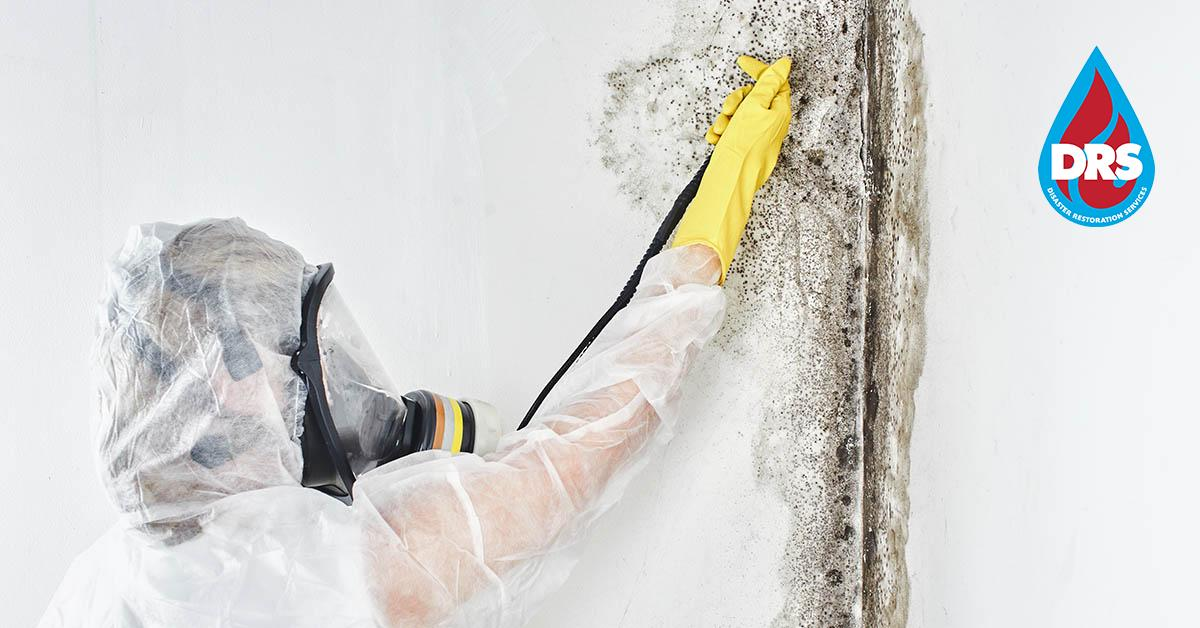IICRC Certified Mold Abatement Contractors in Eagle, CO