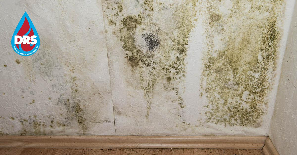 IICRC Certified Mold Remediation Contractors in Dillon, CO
