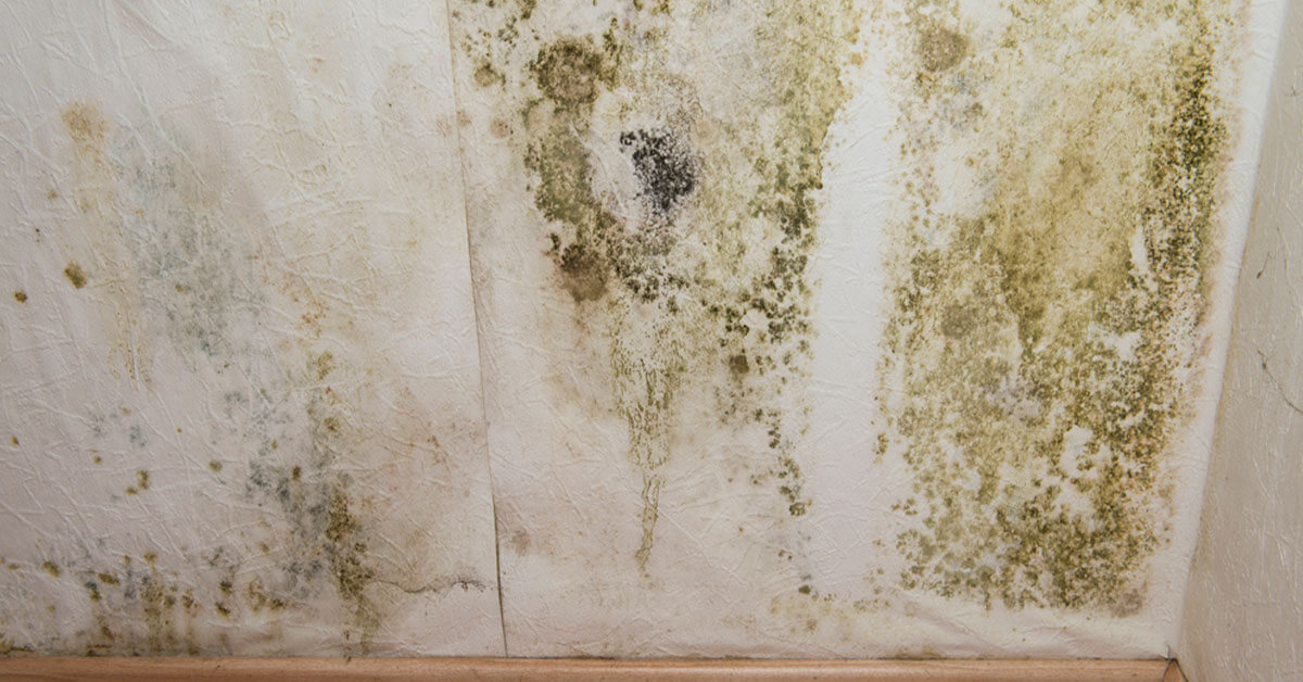 Professional Mold Removal in Vail, CO