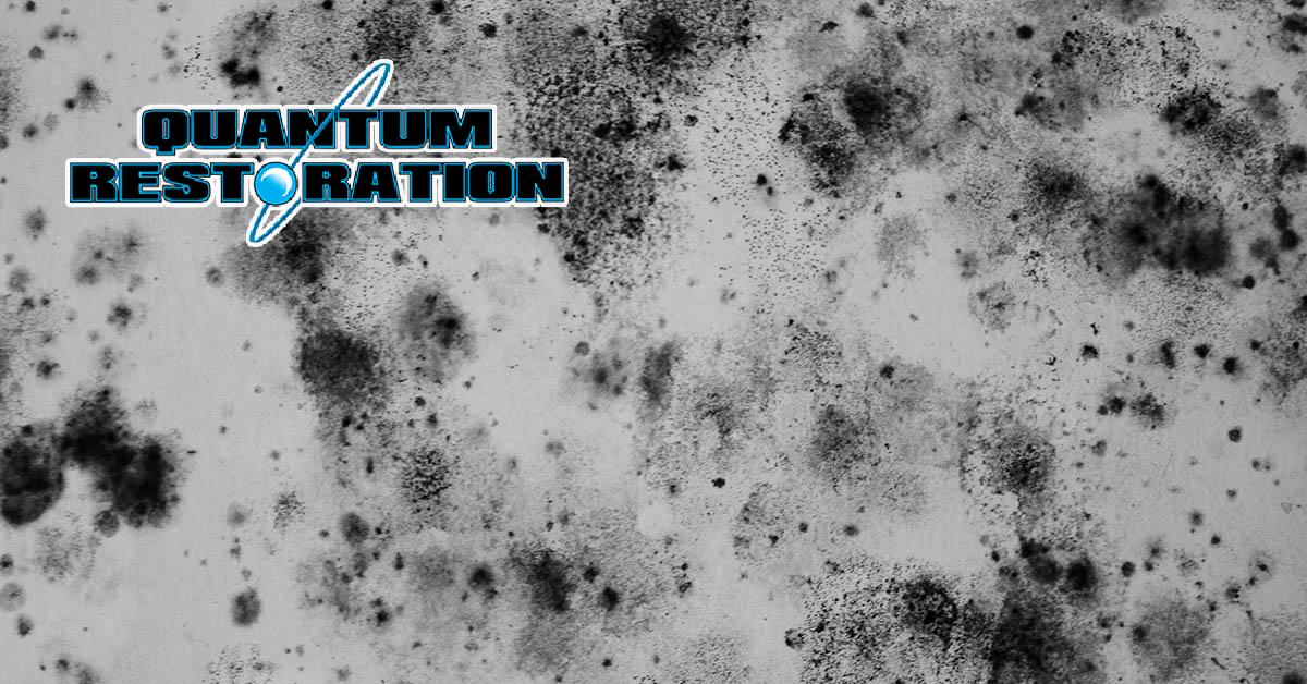 Certified Mold Mitigation Company in Christmas, FL