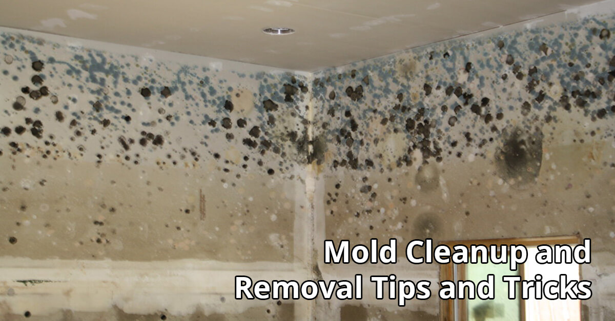 Mold Abatement Tips in Voorhees Township, NJ