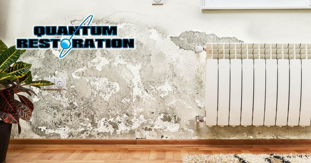 Certified Mold Damage restoration in Clarcona, FL