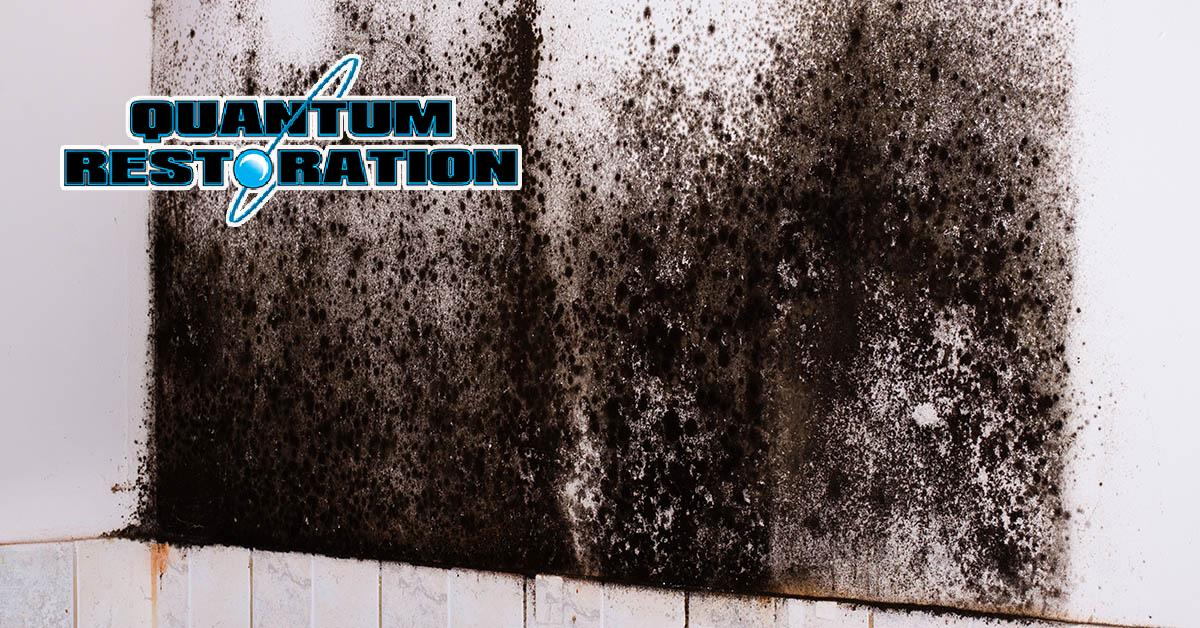 Certified Mold Mitigation in Gloucester Township, NJ