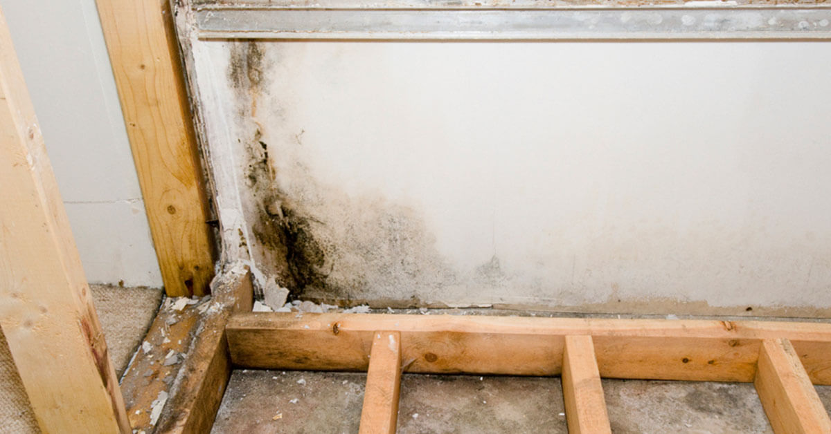 Certified Mold Remediation in Clarcona, FL