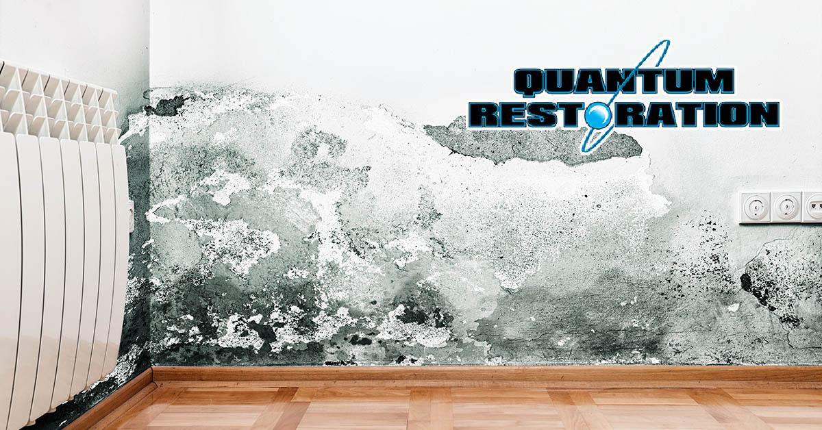 Certified Mold Mitigation Company in Clarcona, FL