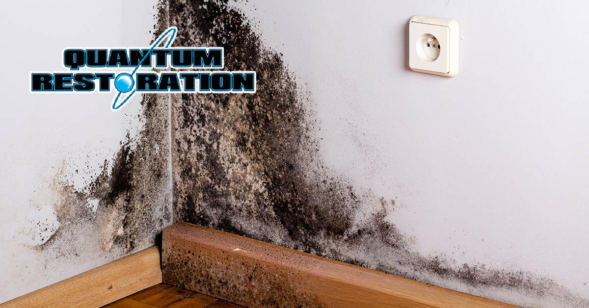 Certified Mold Mitigation in Oakland, FL