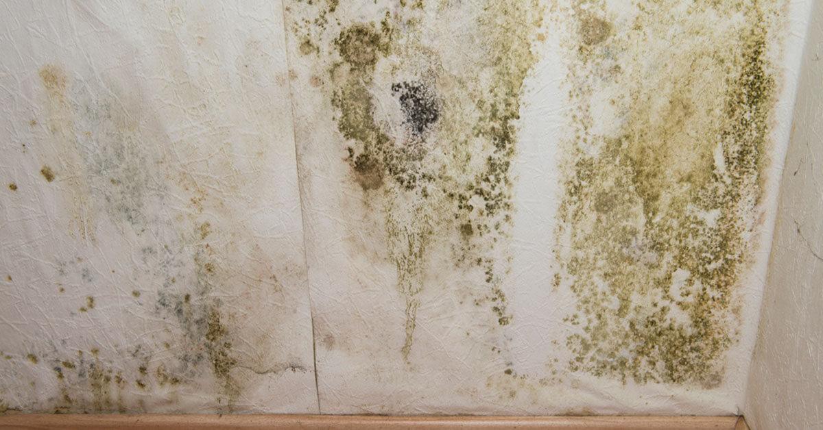 Certified Mold Mitigation in Ocoee, FL