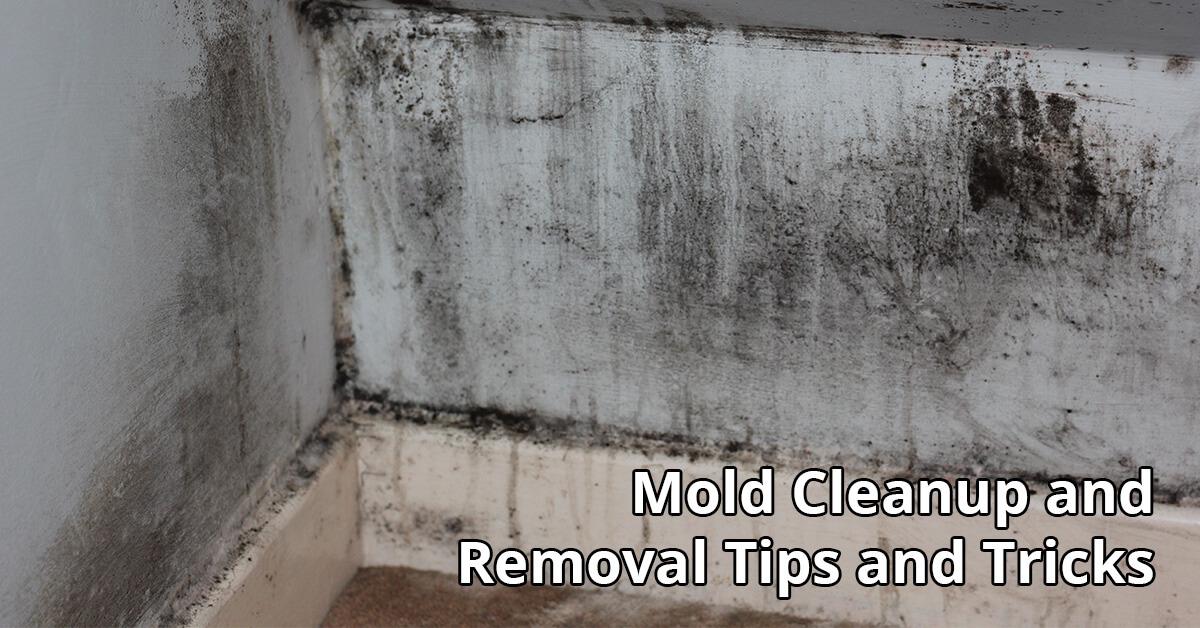 Mold Remediation Tips in Pennsauken, NJ