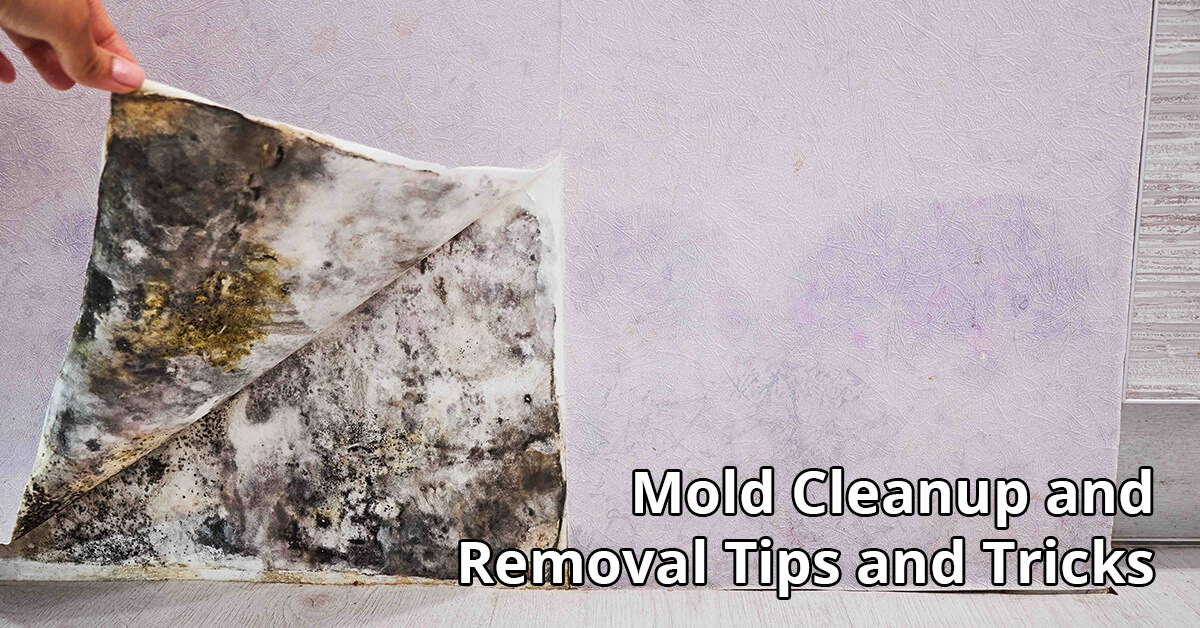 Mold Removal Tips in Haddon Township, NJ
