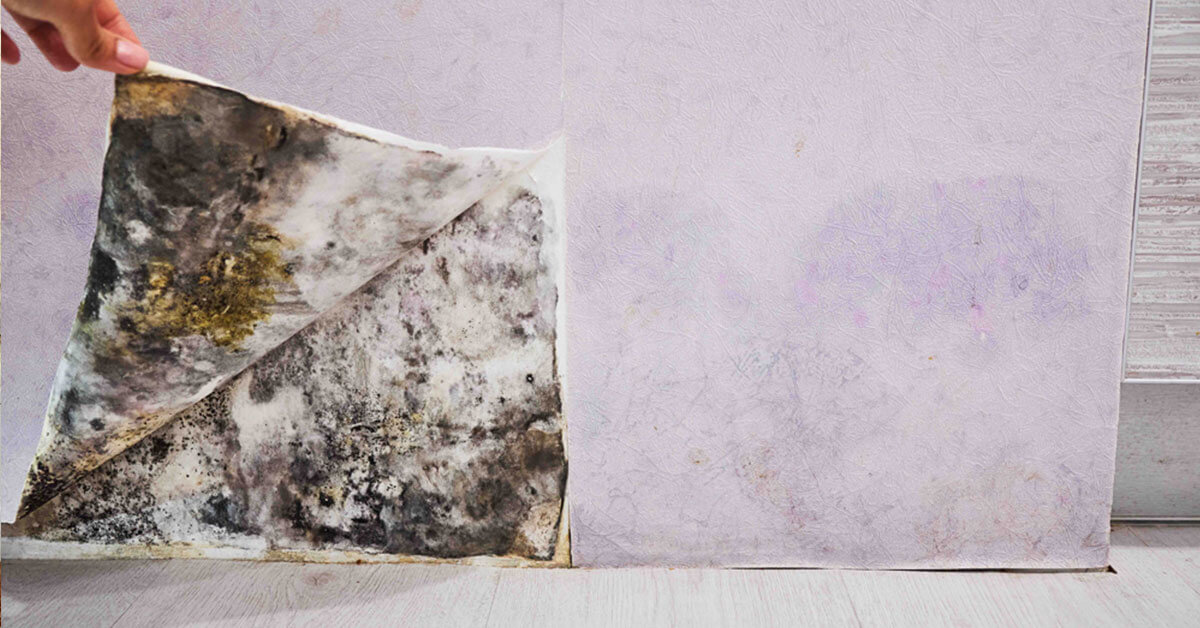 Certified Mold Damage Restoration in Haddonfield, NJ