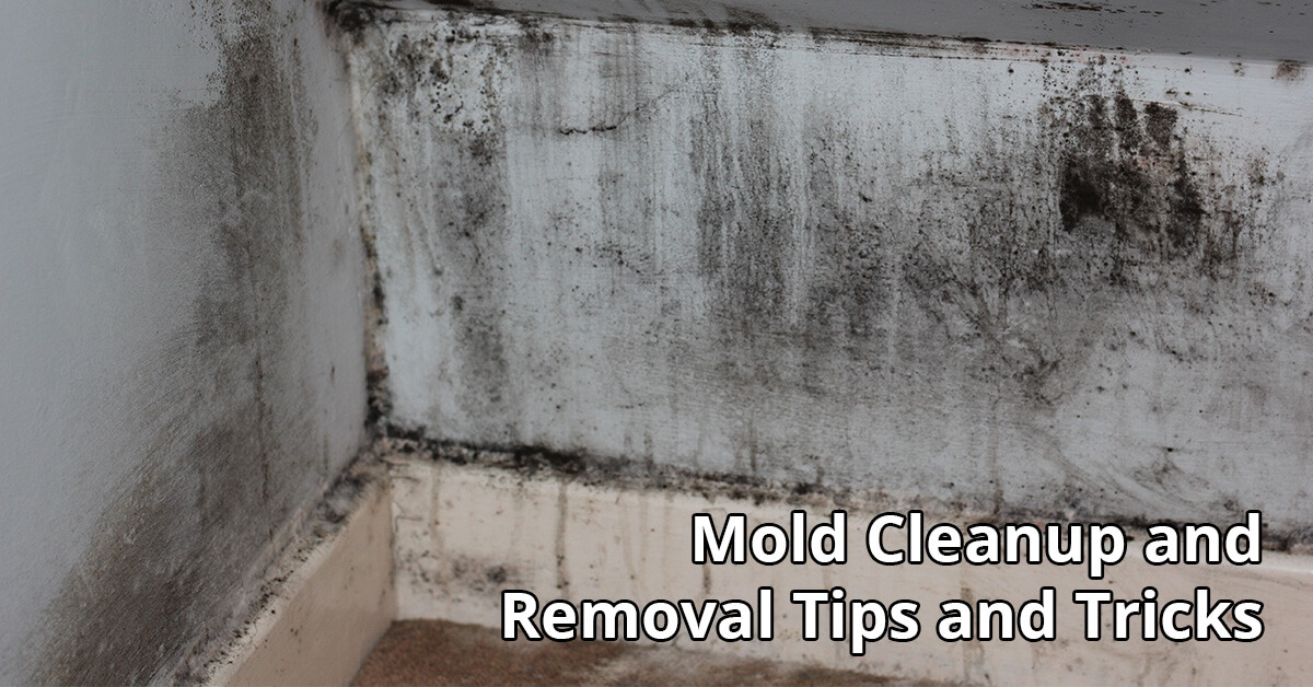 Mold Abatement Tips in Haddonfield, NJ